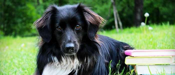 trabajar como adiestrador de perros