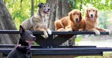 Perros de raza y mestizos