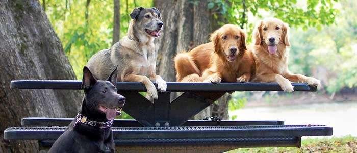 Perros de raza y perros mestizos ¿Cuál es la diferencia?