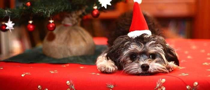 5 consejos de seguridad para tu perro en navidad