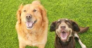por qué contratar a un adiestrador de perros