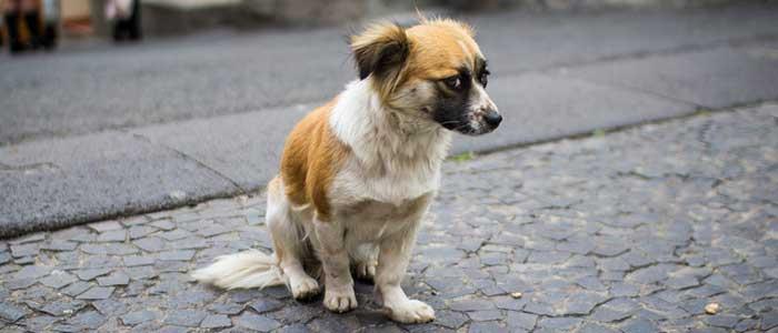 sociabilización en cachorros problemas