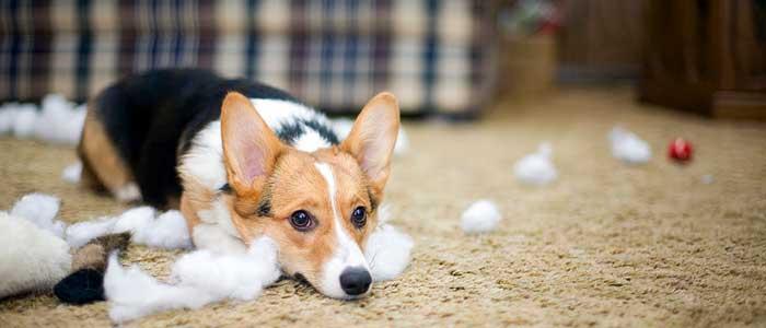 ansiedad por separación en perros síntomas