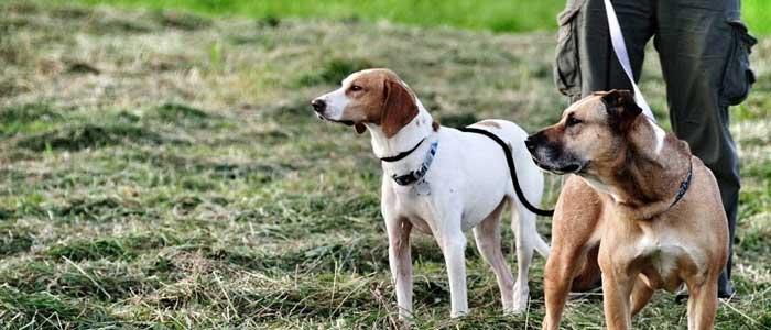 ¿Cuánto cuestan los servicios de un adiestrador de perros?
