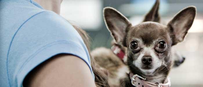 cuanto cuesta adiestrador de perros precios