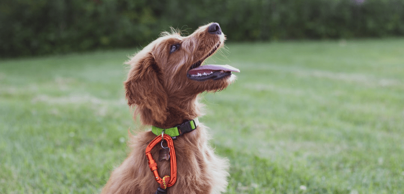 cómo educar a un cachorro