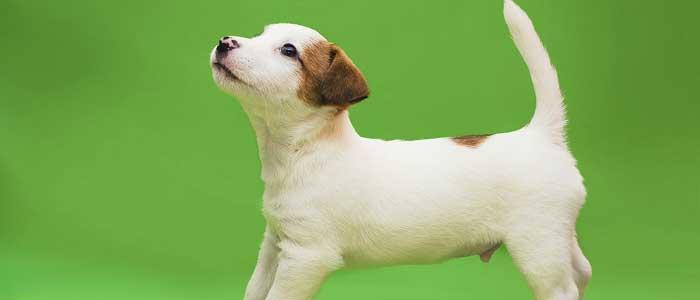 como educar a un cachorro relacionarse