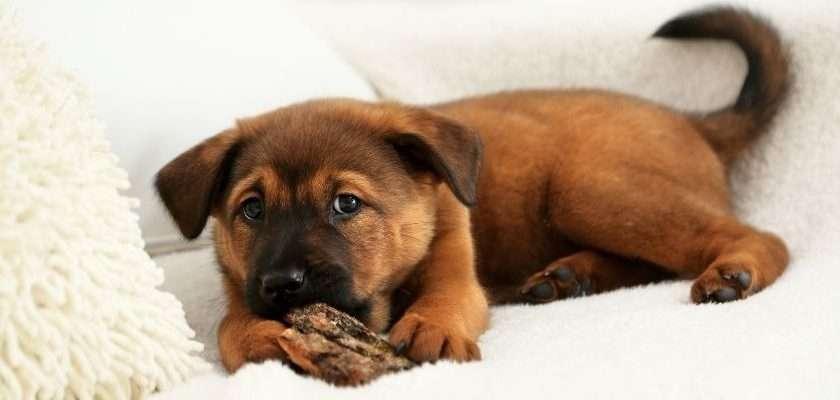 cómo conseguir que mi cachorro esté más seguro en casa