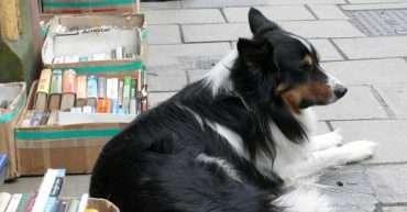 libros de educación canina