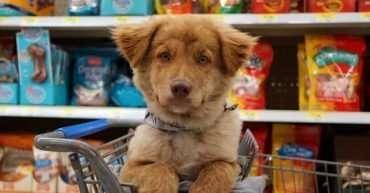 que necesita un cachorro