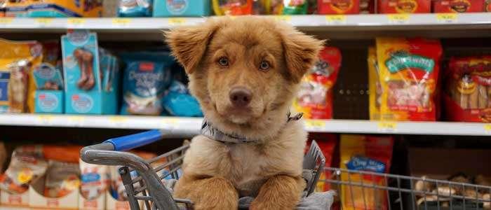 7 cosas IMPRESCINDIBLES que debe tener un cachorro al llegar a casa