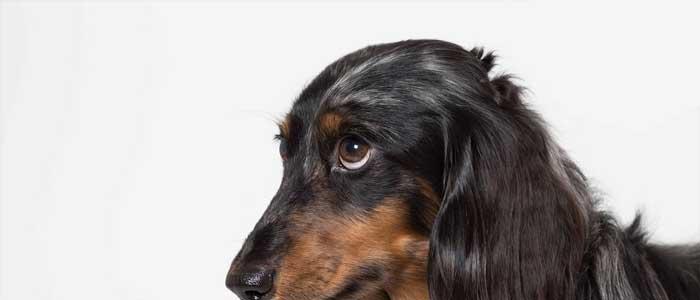 culpabilidad perros apariencia