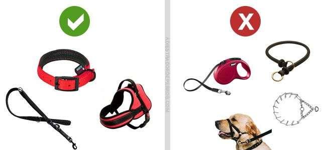 materiales para pasear a tu perro