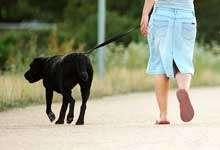 durante el paseo adopta una actitud tranquila