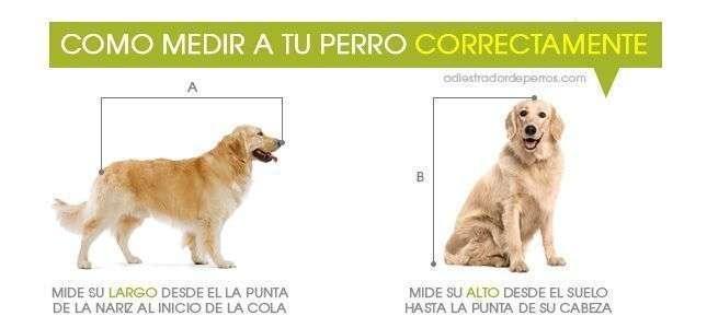 como medir a un perro