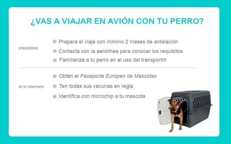 consejos para viajar en avión con perro
