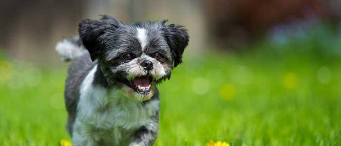 perro feliz salud