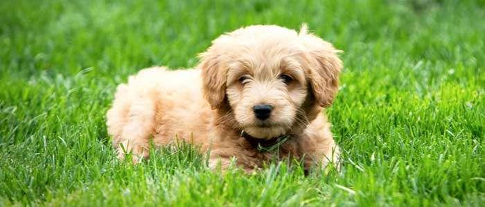 consejos de fotografía para perros camara