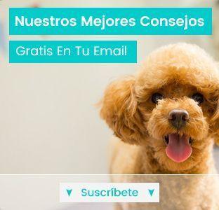 newsletter de perros