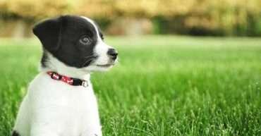 consejos básicos cachorro