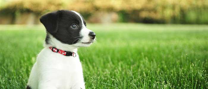 10 consejos básicos que te ayudarán a vivir mejor con tu cachorro