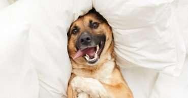 Cómo hacer que tu perro se sienta feliz en casa