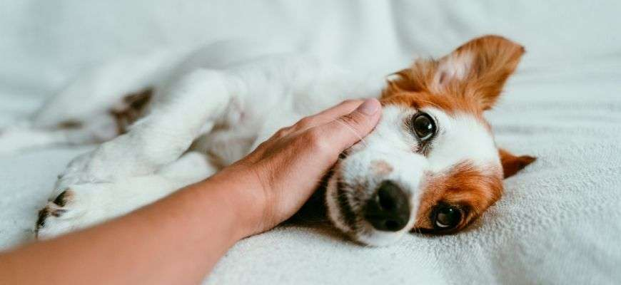 6 excelentes maneras mejorar la relación con tu perro