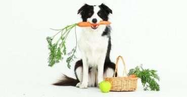 motivos por los que deberías incluir zanahoria en la dieta de tu perro