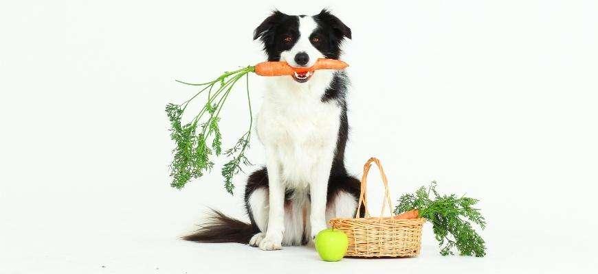 5 motivos por los que deberías incluir zanahoria en la dieta de tu perro