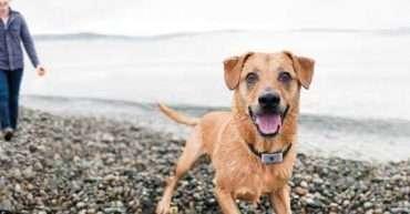 Collar antiladridos para perros