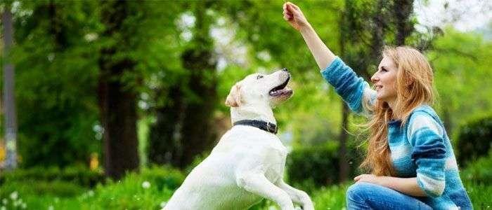 Curso de adiestramiento canino ¿Cuál elegir? Los 5 mejores del 2018