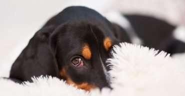 como ganar la confianza de perro miedoso