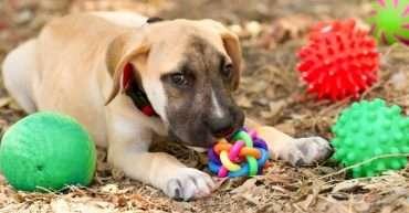 comprar juguetes interactivos para perros