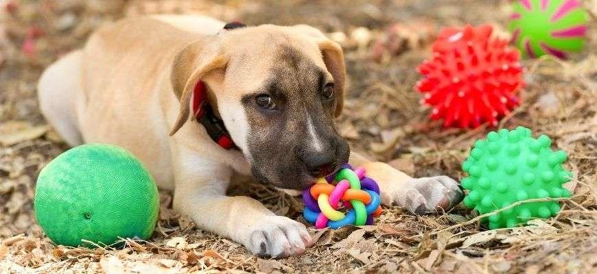 Los 10 Mejores Juguetes Interactivos Para Perros