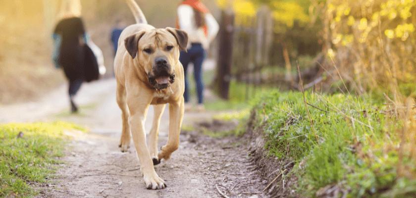 como hacer más entretenido el paseo de tu perro