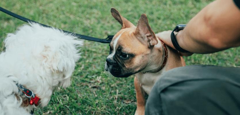 perro aprendiendo adiestramiento básico