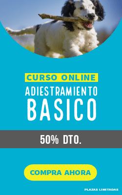 promoción curso adiestramiento básico