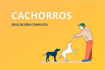 curso educación cachorros