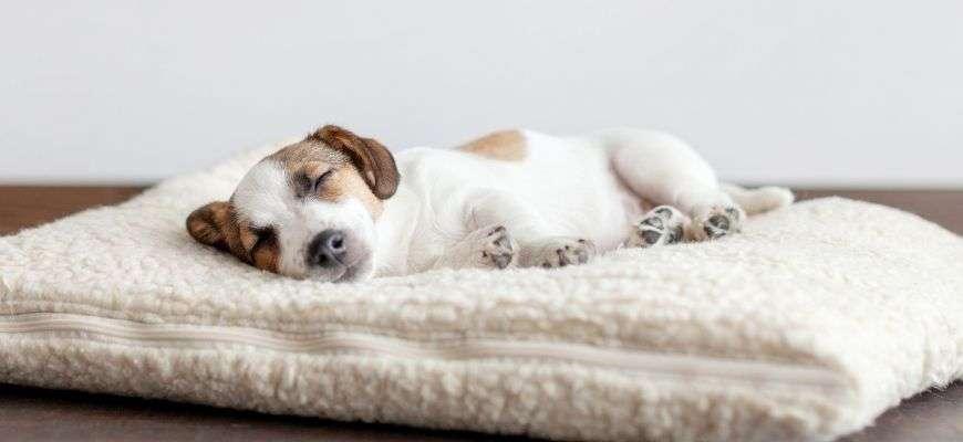 perro descansando en su zona de calma